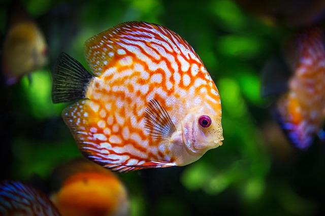 10 najważniejszych rzeczy, które musisz wiedzieć kupując pierwsze akwarium